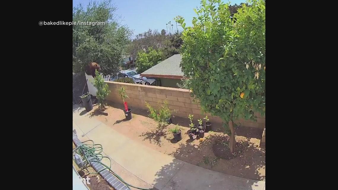 California teenage girl saves dogs from mother bear in backyard