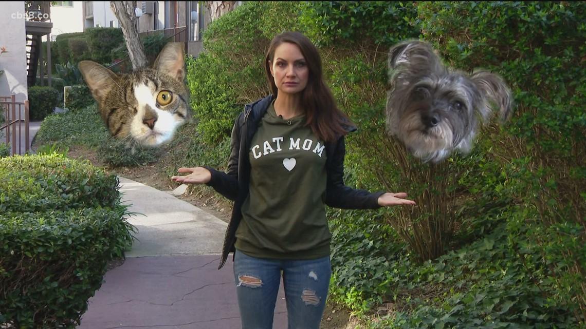 Team CAT or Team DOG?