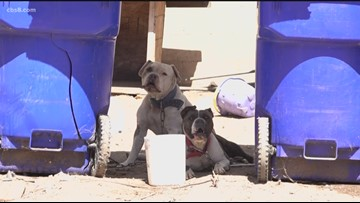 San Diego Humane Society investigating after 2 dogs were left outside with no shade, food or water