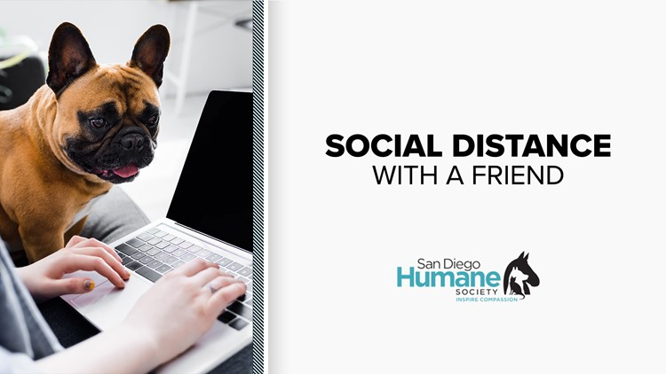 Social distance with a friend