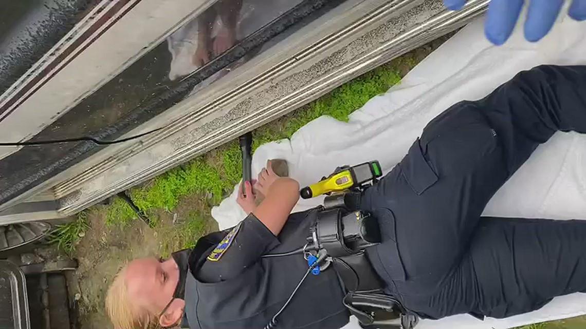 SDHS Humane Law Enforcement rescue puppies underneath a van in San Diego
