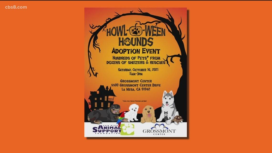 Howl-O-Ween Hounds Mega Adoption Event