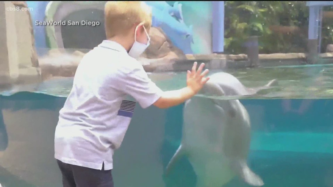 SeaWorld San Diego reopens with 'Zoo Days' Friday