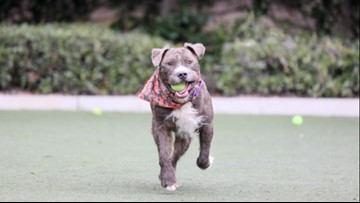 Buddy Holly is a shy guy looking to be the center of your home