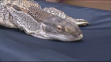 Find your next pet at the Reptile Super Show