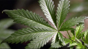 Your Stories: Chula Vista residents frustrated with illegal pot shops