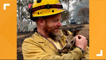 'That thing was so cute' | California firefighter rescues baby Kangaroo from Australia bushfires