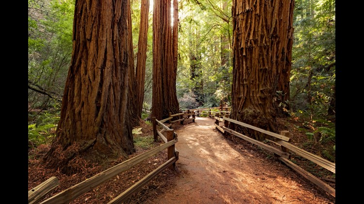 Muir Woods isn't far from San Francisco, but it feels like a completely different world when you're there. (Image by topseller/Shutterstock)