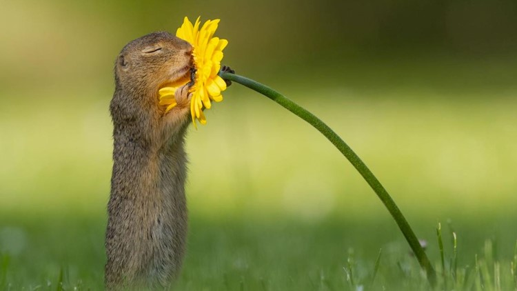 Squirrel hugging flower wcnc
