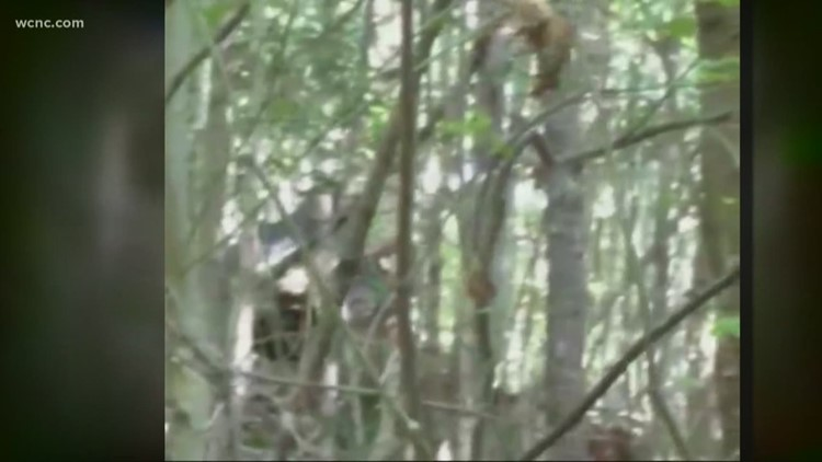 North Carolina man claims he spotted three Bigfoots