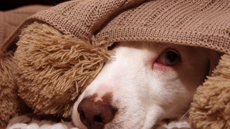 Fireworks and your pet: tips for helping them stay calm and safe