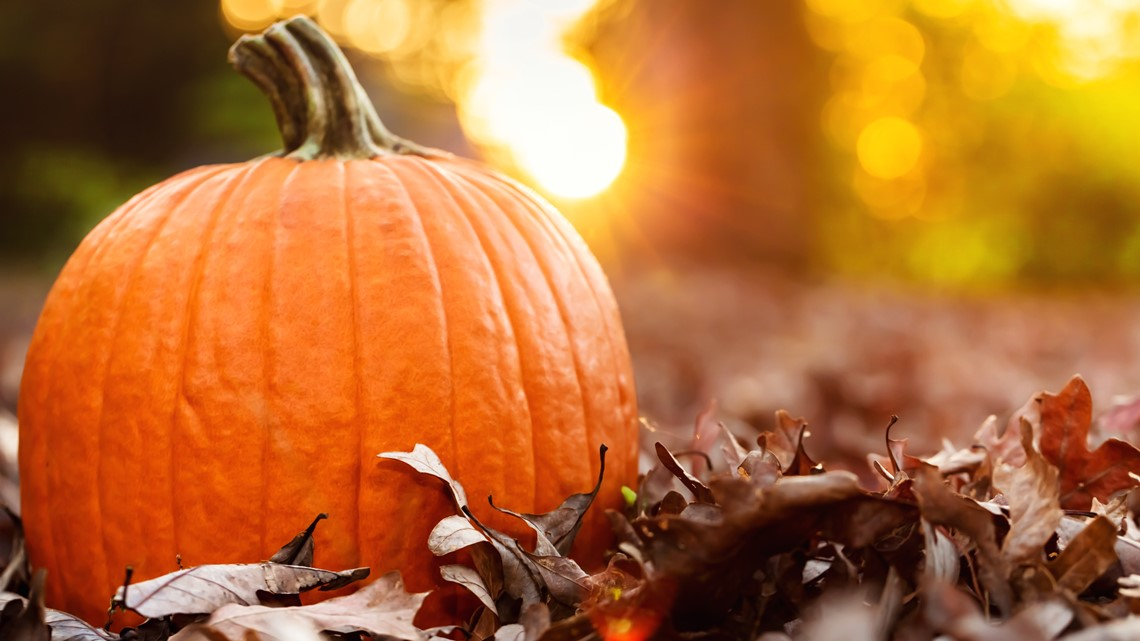 Here's a list of things to do this fall throughout San Diego