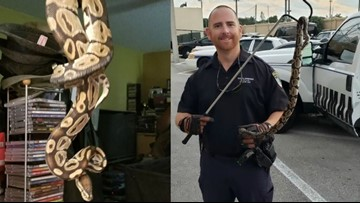 4-foot python pops out of Florida man's toilet, bites him on the arm