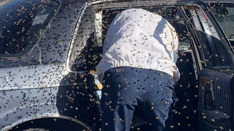 15,000 bees that swarmed a parked car in New Mexico were removed by off-duty firefighter