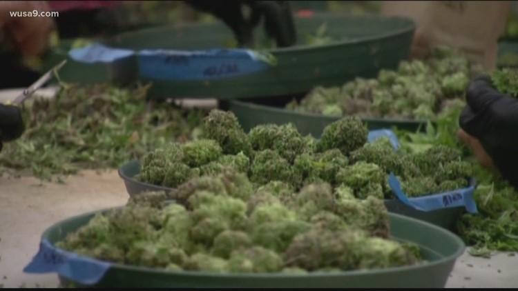 Virginia lawmakers vote to legalize marijuana in 2024